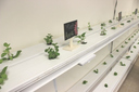 Students Create Aquaponic Garden in Classroom